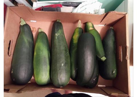 Home grown Zucchini and Yellow Squash